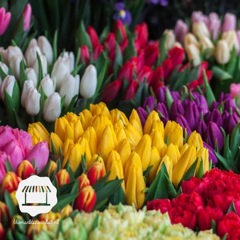 Je eigen Keukenhof – Hoe zaai ik Tulpen?