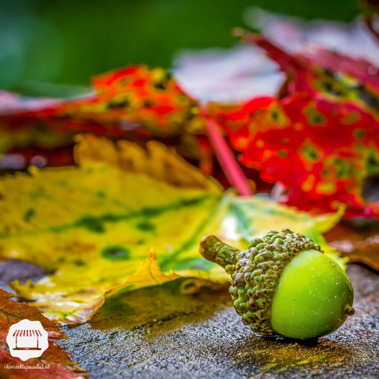 Creatief met de herfst