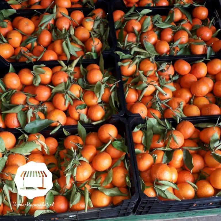Clemenvilla mandarijnen
