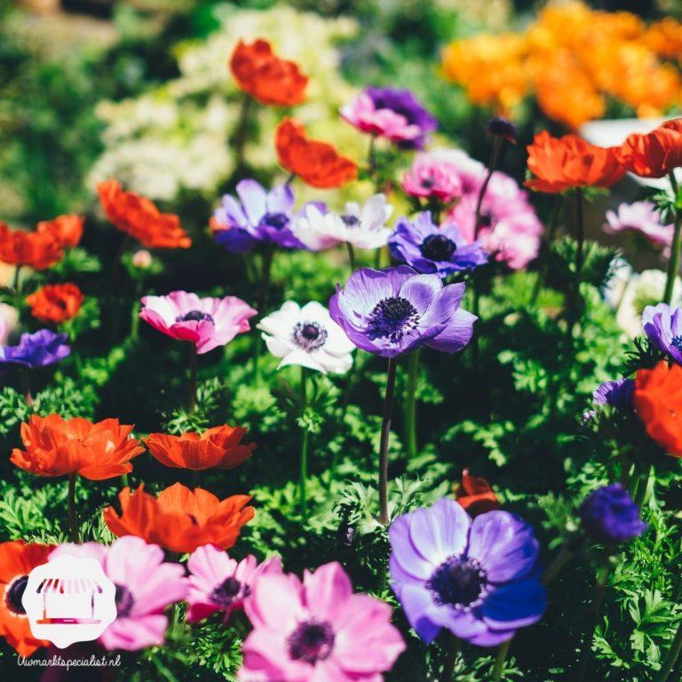 Maak je tuin zomerklaar