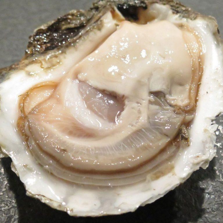 Bélon oester