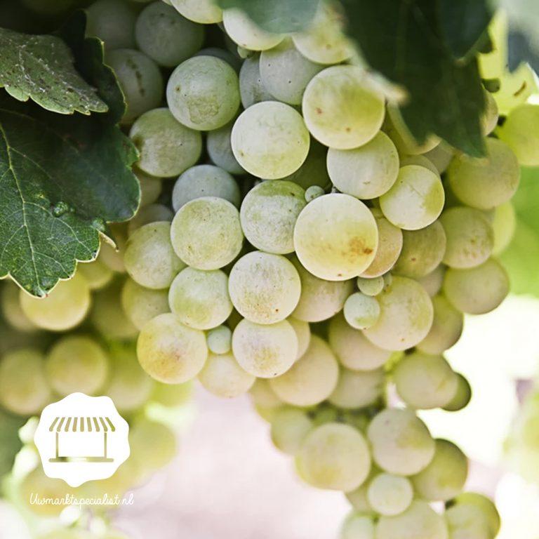 Heerlijke muskaat druiven