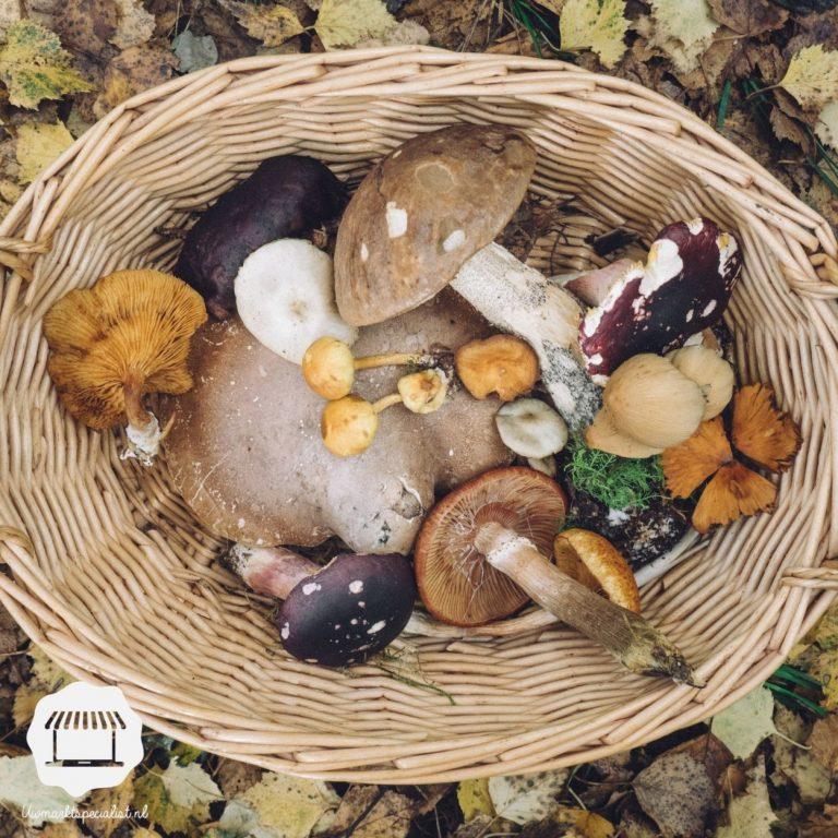 Het seizoen voor paddenstoelen
